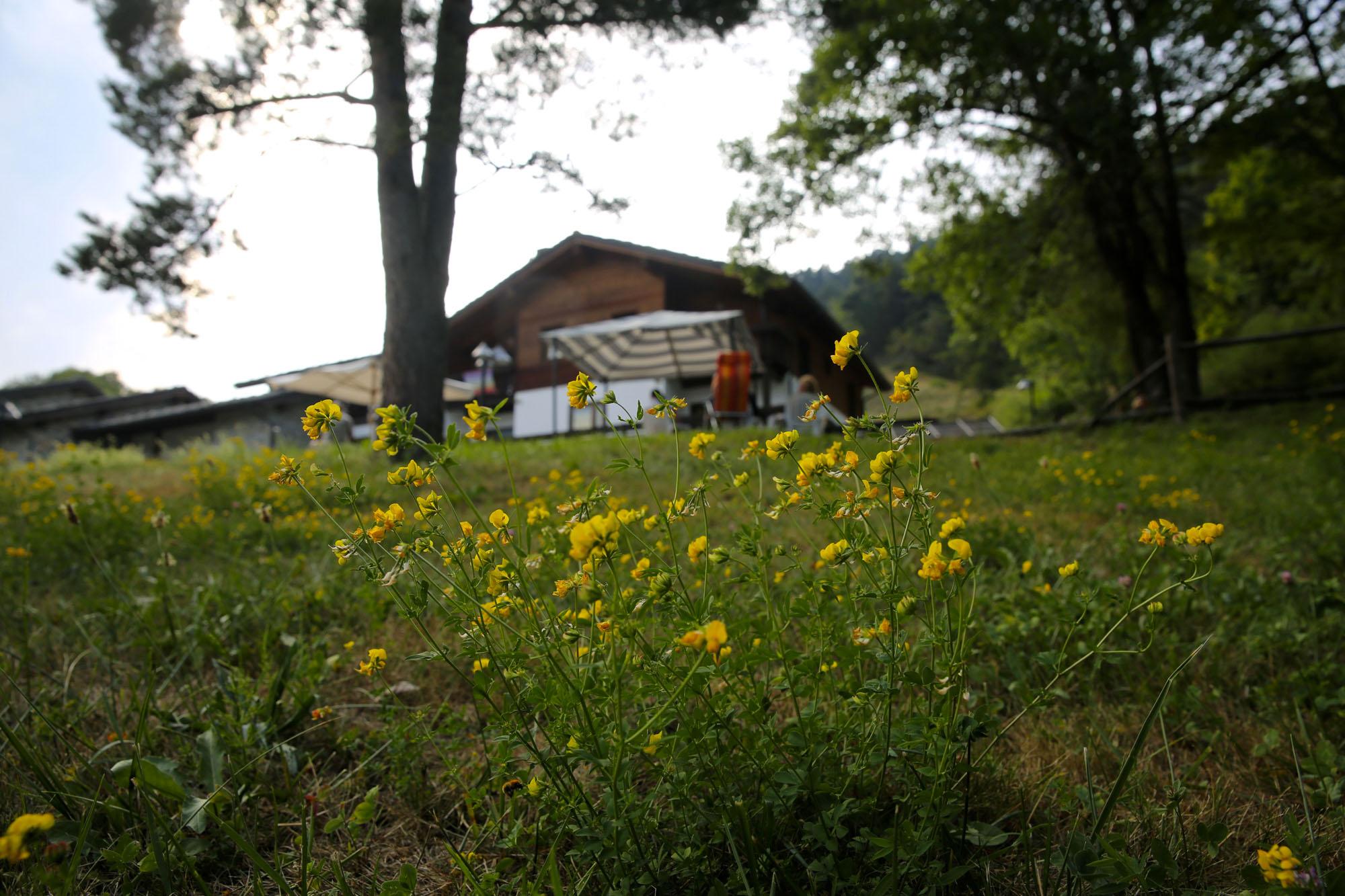 Casa Alpina Petit Rosier